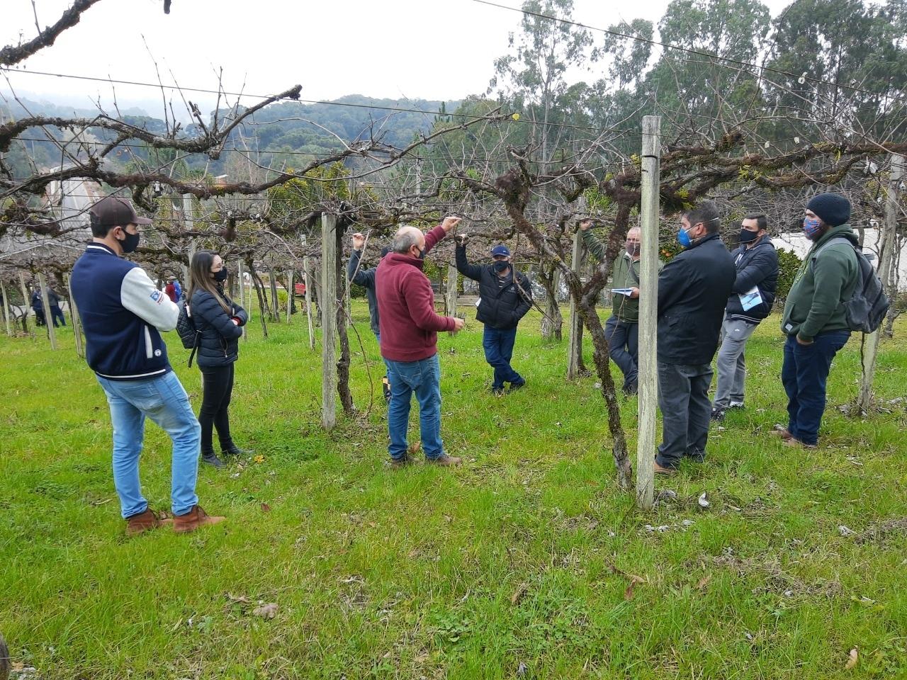 agricultores recebendo instrução de como fazer a poda das parreiras